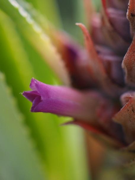 Golden pineapple flower