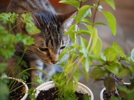 Ms Eight and the herb garden